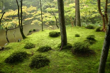 Saihouji-kokedera01